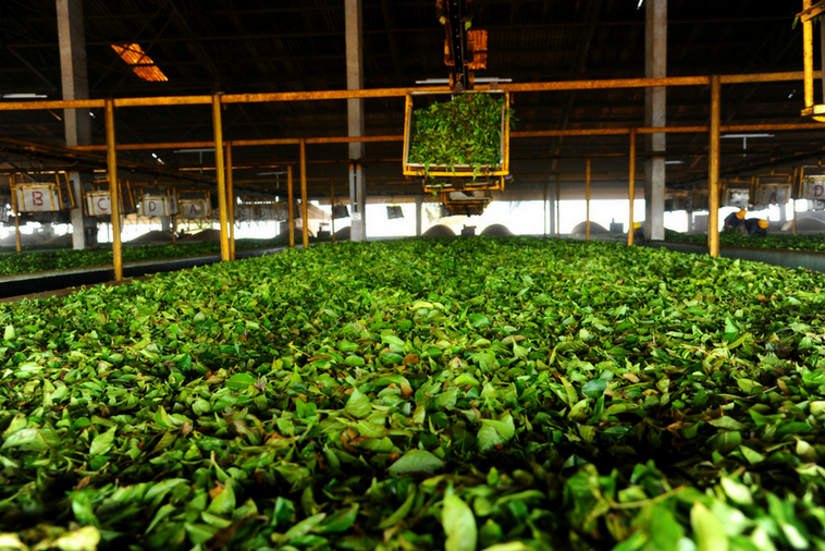 Geeragama Tea Factory