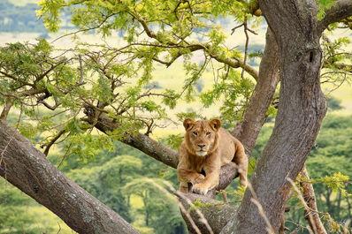 Queen Elizabeth National Park