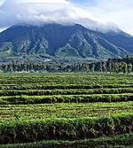 parque-nacional-volcanes-ruanda.jpg