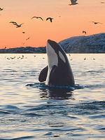 destinos-video-ballenas-canada_0.jpg