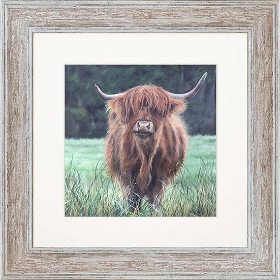 Isla Cow 48cm Square Framed Print