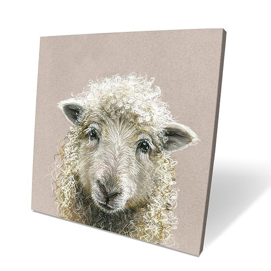 Suzy Sheep 40cm Box Canvas