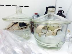 Ceramic treatment