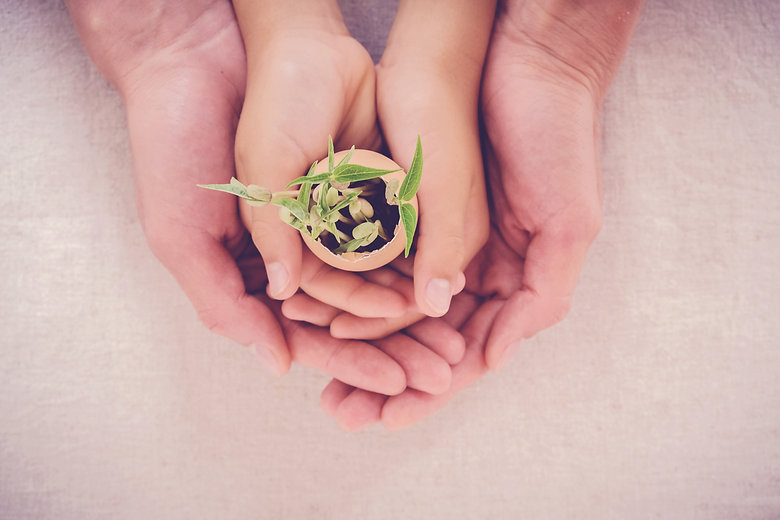 adult and child hands holding seedling p