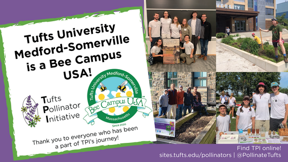 Tufts University Medford-Somerville is now a Bee Campus USA!