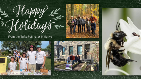Holiday gift ideas to spread the pollinator love