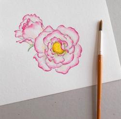 Rose watercolour