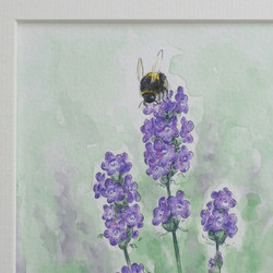 Lavender bumblebee
