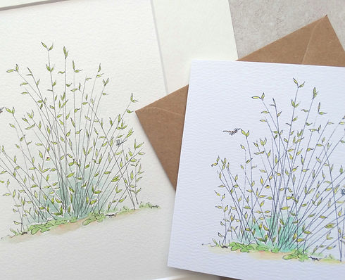 rushes print and card - Copy.JPG