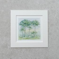 Miniature pine trees watercolour