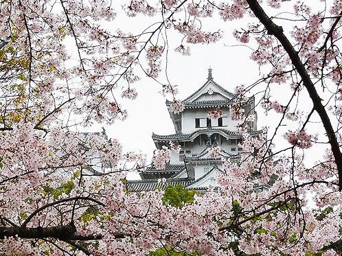 Fotomural Castillo Himeji