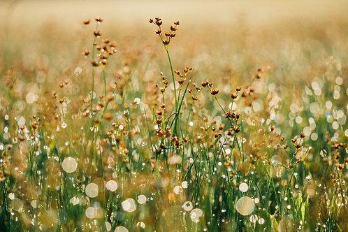 Floral Zen