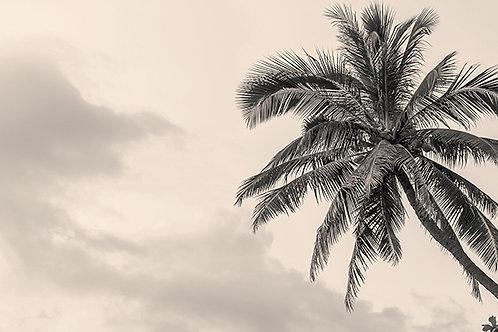 Palmera en blanco y negro