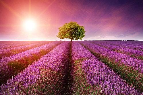 Árbol en el horizonte