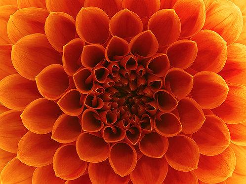 Fotomural flor otoñal