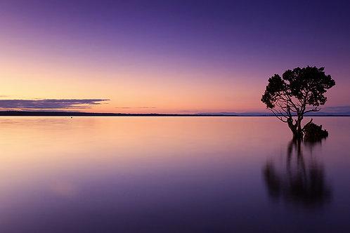 Fotomural playa violeta