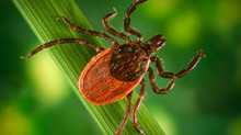 Let's Talk Ticks!!