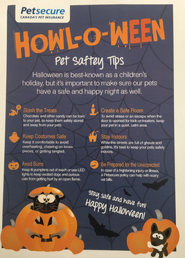 Howl-o-ween Safety
