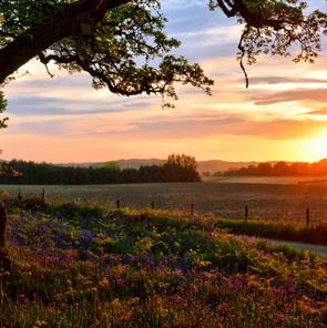 Rural Sunset.jpg