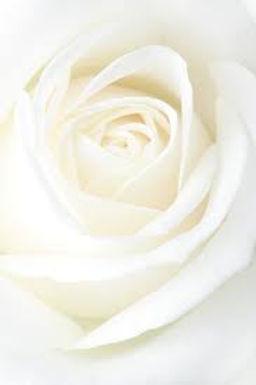 White Rose Background.jpg
