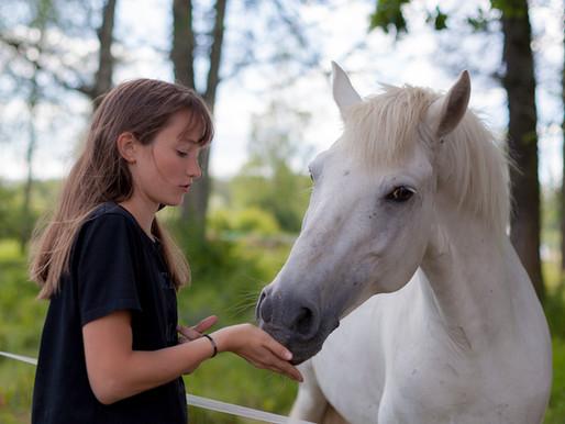 Pie zirgiem! Ar ko cienāt zirgus un kā sagatavoties izjādei?