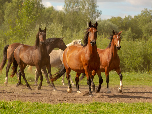 Pirmais zirgs