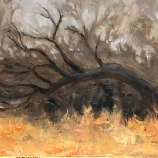 Dead Tree study