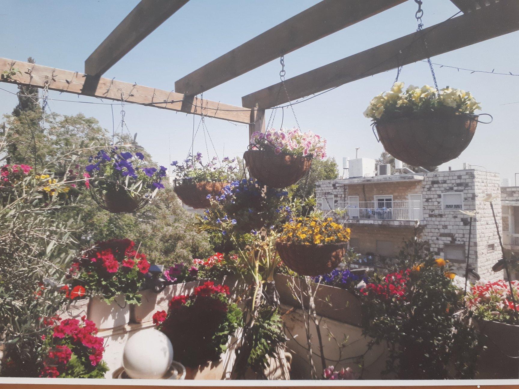 HaPalmach  - at home in jerusalem (2)