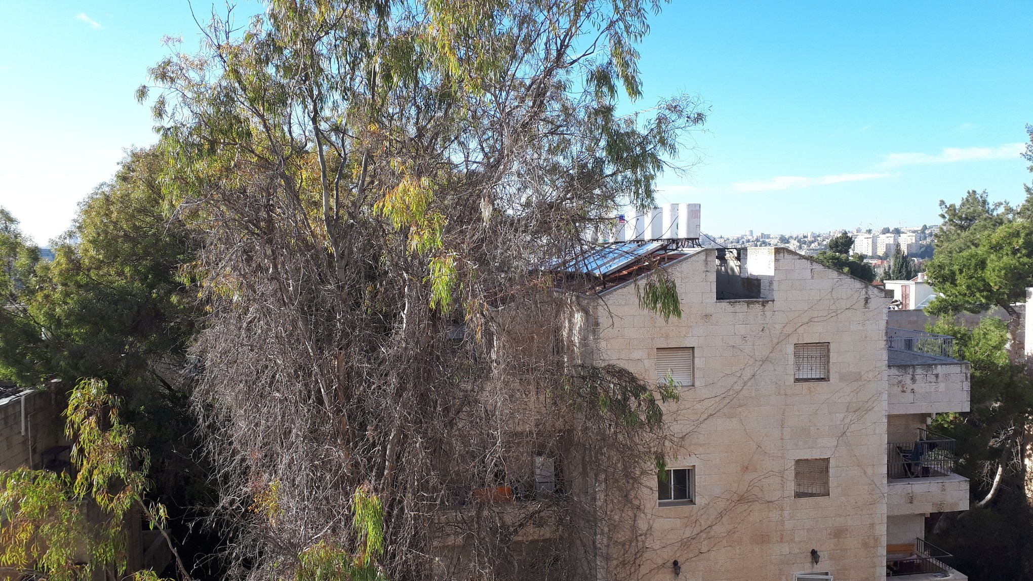 Mordekhai ha-Yehudi - at home in jerusal