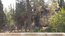 Khananya  - at home in jerusalem (11)