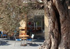 1210x840_gordons cafe - through olive tr