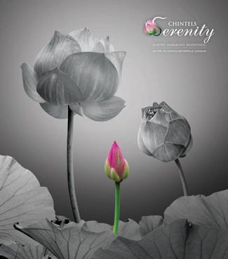 Chintels Serenity.