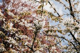 Forårsblomster.jpg