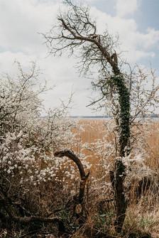 Forår_træ.jpg
