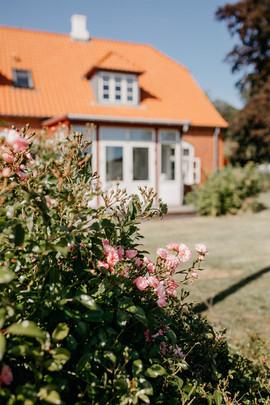 Jungshoved Præstegaard_roser_i_haven.jpg