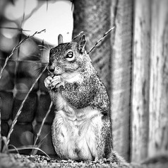 Morning Companion  #squirrel #morning #s