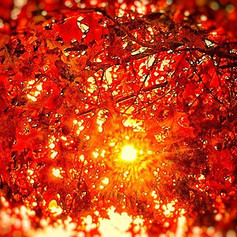 Behind the Scenes  #fall #tree #nature #