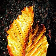 Leaf  #leaf #nature #naturephotography #