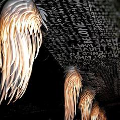 Wings of Angels  #lights #lighting #rest