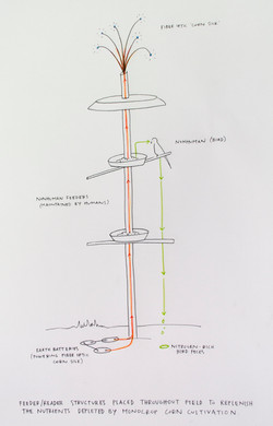 Zea/Corvus/Homo 1