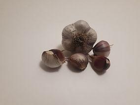 Marbled Purple Stripe Mrtechi.jpg