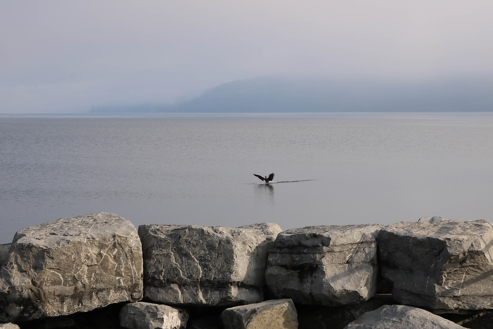Bird on Seneca Lake by Helen Sullivan Heizyk