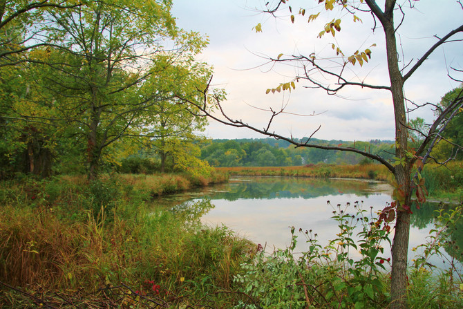 Trees for Tribs Grant to fund Sugar Creek Restoration Project