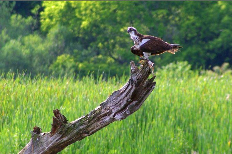 Townsend-Grady Wildlife Preserve
