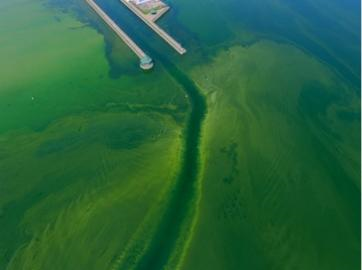 Blue-green algae – the scourge of the Finger Lakes!