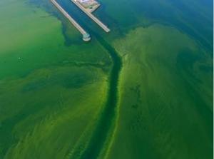 Photo credit:  Owasco Lake Watershed Inspectors