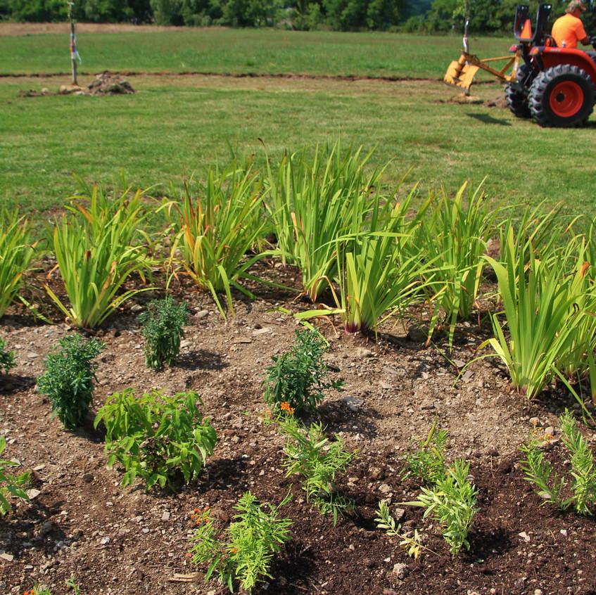 Restoration Plantings