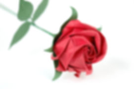 Red Paper Rose 1.jpg