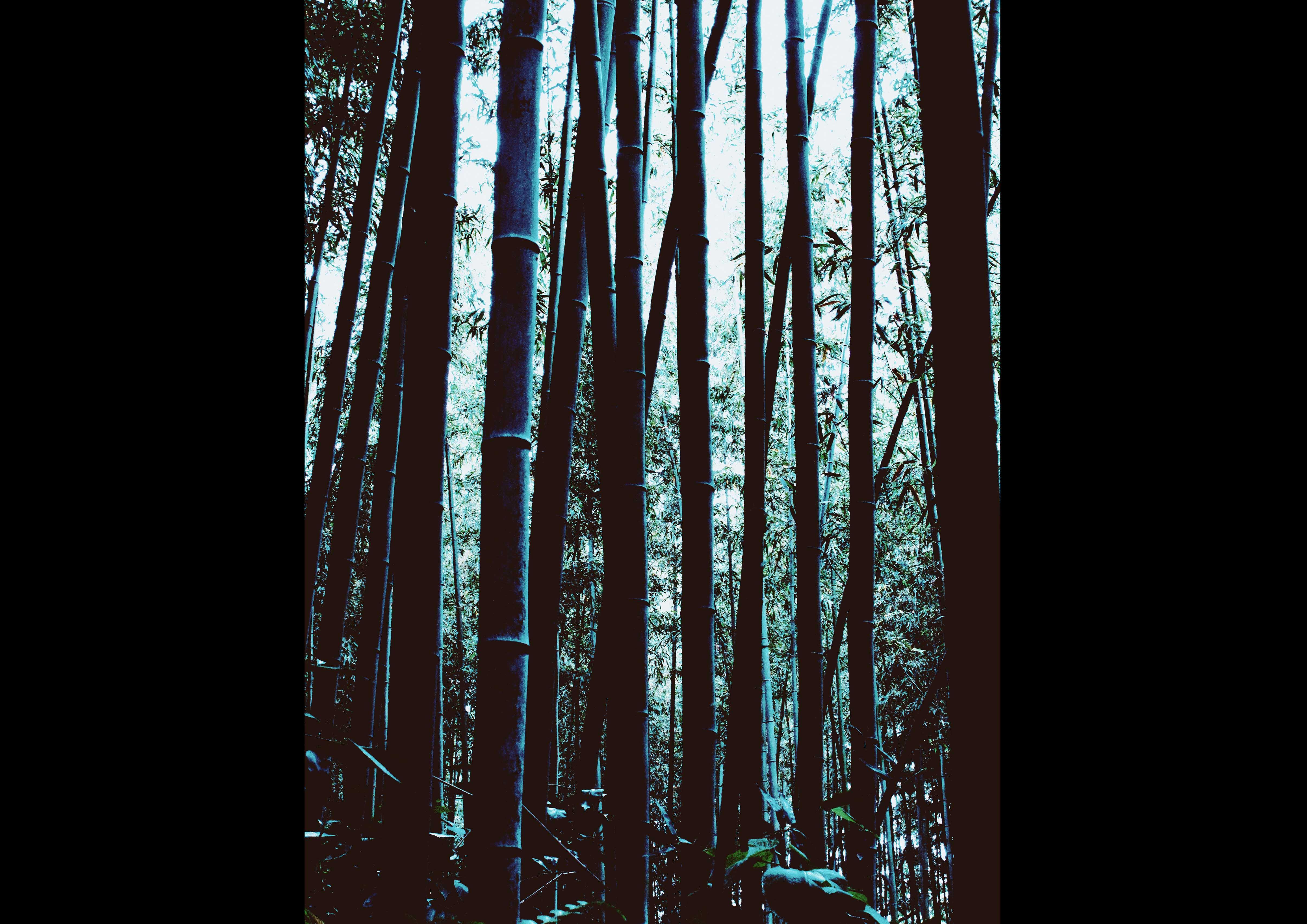 竹 bamboo