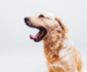 Hond die nerveus is